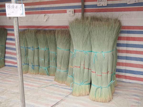 長さごとに選別されたい草