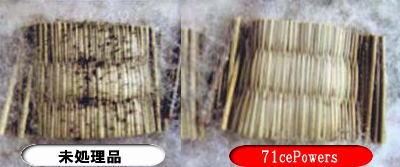 強制的にかびが発育し易い環境で28日後(約3~5年後の期間に相当)の写真