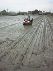 kumamoto151113-2jpg